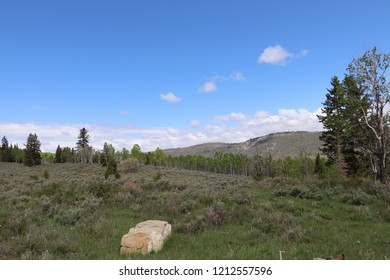 Quaking aspen, sagebrush, douglas fir trees, with a large stone in the fore ground taken at Soldier Summit Utah May 2018