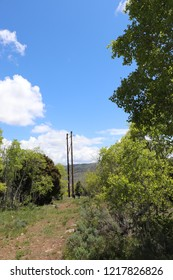 Quaking aspen and sagebrush, with a man and woman walking past a power pole in the distance at Soldier Summit Utah
