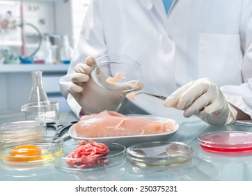 Quality control expert inspecting at food specimen in the laboratory