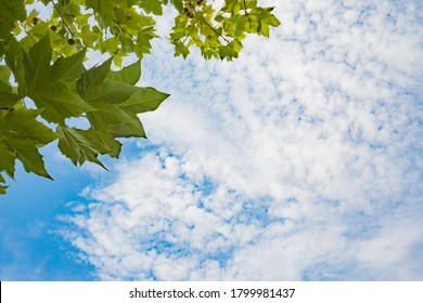 Quality photographic image. Image of sky with leaves of a tree.