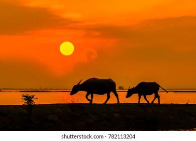 Quang Ninh, Quang Binh Province, Vietnam, October 26, 2017: Sunset on Kien Giang River