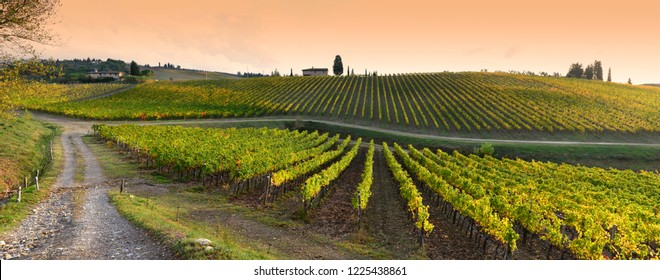 Quarate village near Florence November 2018: Rows of yellow vineyards at sunset in Chianti region near Florence during the colored autumn season. Tuscany in Italy