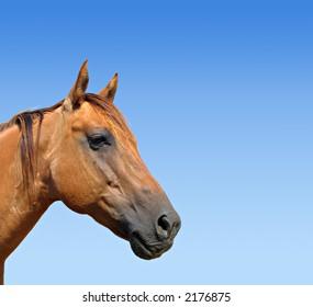 Quarter horse mare against a gorgeous blue sky