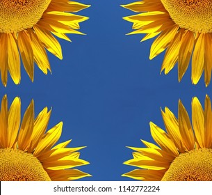 quarters of vier sunflowers in front of blue sky, symmetry