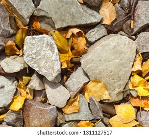 Quartzite stones lying on the ground together with wet yellow autumn leaves. Brdy hills, Czech republic.