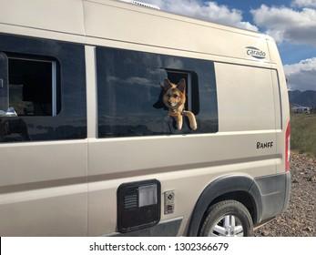 Quartzsite, Arizona / USA - January 13, 2019: a dog in a campervan