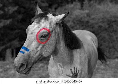 Quater Horse in Black White with Fingerpainting in Colour