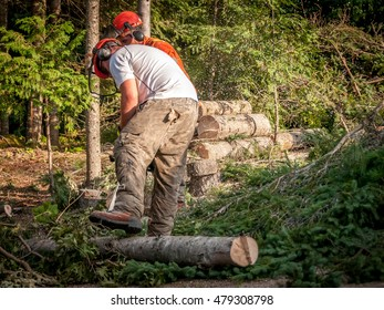 Quebec, Canada - August 5, 2016 : professional lumberjacks cutting trees with chainsaw in Quebec country, Canada -- serial pictures