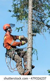 Quebec, Canada - August 5, 2016 : Professional lumberjack cutting tree on the top  with a chainsaw in Quebec country, Canada  - serial pictures