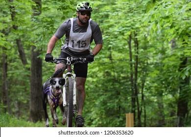 Quebec, Quebec / Canada - October 1, 2018: Canicross race