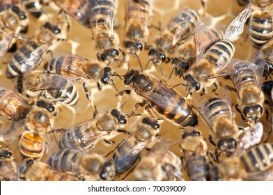 queen bee surrounded by her workers