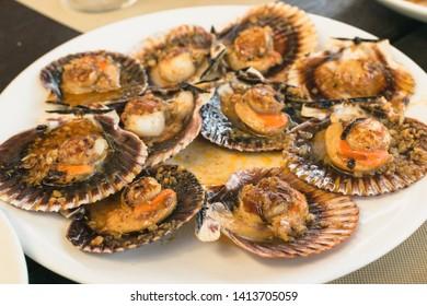 queen scallops dish. Spanish tapa of zamburiñas