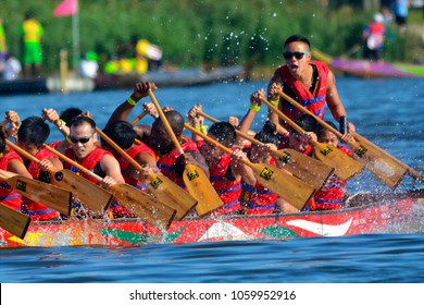 Queens, NY/USA - August 9 2015. Dragon boat racing during Dragon Boat Festival in Flushing Meadows Park.
