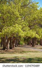 Queens Park and Botanic Gardens Toowoomba Queensland Australia