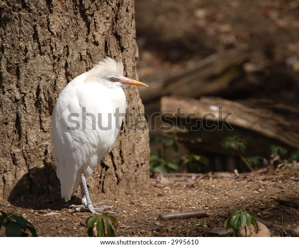 queens zoo, white heron
