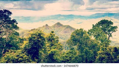 Queensland rainforest in the Gold Coast hinterland near Mount Warning with retro style filter effect
