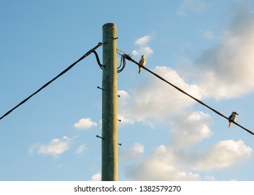 Queensland Wildlife Birds which are Two Kookaburra's on an Outback Powerline during a beautiful Sunset Afternoon in Autumn. Australian Birds in Australia