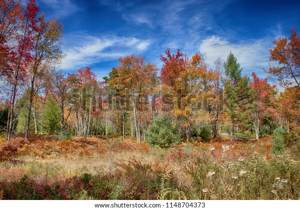 Quehanna Wild Area is a wildlife area within parts of Cameron, Clearfield, and Elk counties in the U.S. state of Pennsylvania; with a total area of 48,186 acres (75 sq mi; 195 km2), it covers parts of