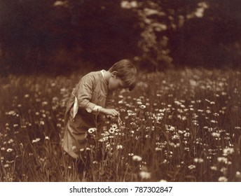 Quentin Roosevelt catching June bugs in a field of daisies at Sagamore Hill, 1904. President Theodore Roosevelts youngest son was photographed by Edward S. Curtis, famous photographer of Native Americ