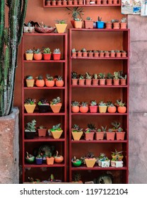 Queretaro/Mexico/07/25/2018/Shelf full of tiny cactus
