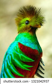 quetzal bird Mexico