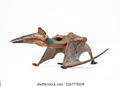 Quetzalcoatlus ,dinosaur on white background  .