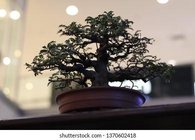 Bonsai Exhibition Images, Stock Photos & Vectors | Shutterstock