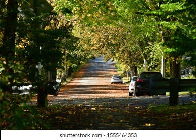 Quiet Autumn Elm Tree Lined Street in a Residential Area Halifax Nova Scotia Canada