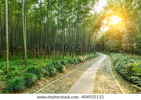 Quiet Bamboo Forest Trail Hangzhou China Stock Photo Edit Now