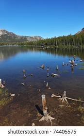 A quiet lake in the mountains, surrounded by forest and dry stumps and snags