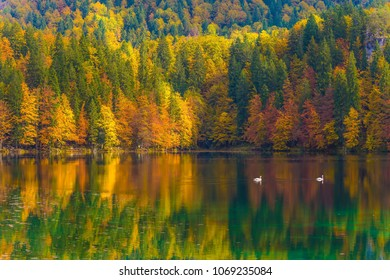 The quiet lake in Northern Italy, Lago de Fusine. Flood after rain. Scenic reflections of multicolored forests in the smooth water of the lake. Concept of cultural and ecological tourism