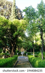 A quiet park path lined with lush orange trees and other greenery leads up to a tiled marble water fountain and in the Jardines de Murillo (Murillo's gardens) in Seville, Andalusia, Spain.