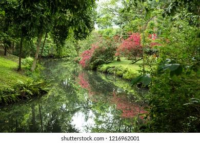 A quiet place in Ibirapuera Park, Sao Paulo, Brazil.tranquility in the Ibirapuera Park, Sao Paulo
