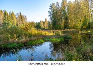 a quiet river in the autumn forest is covered with yellow leaves