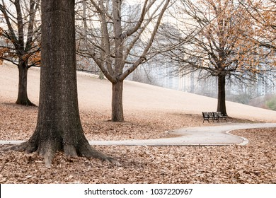 A quiet scene at Piedmont Park in downtown Atlanta Georgia on a winter afternoon.  A path swerves through a landscape of thousands of fallen brown leaves.