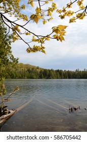 A quiet, shallow lake with yellow leaves overhead in the Beaver Basin Wilderness in Michigan's Upper Peninsula.