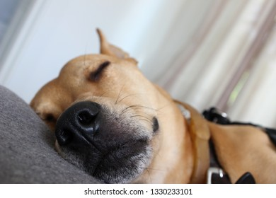 Quiet sleeping dog