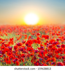 quiet sunset among a red poppy field