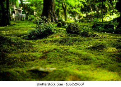 quiet temple within deep fresh green
