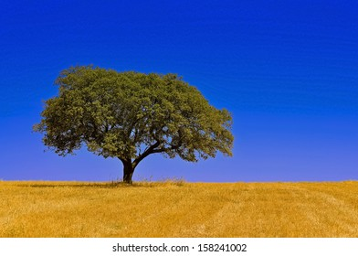 Quiet view over an open field of farmland with a lonely tree and beautiful sky.