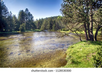 Quiet watercourse crossing the forest of Aigues Tortes National Park in Spain.