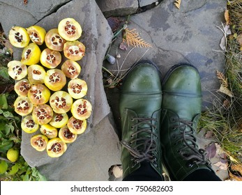 quince autumn story green boots