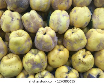 Quince (Cydonia oblonga) fruits background.  Quinces are used also in culinary, juice production etc. in Caucasus