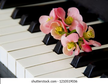 Quince flower on piano flaps - condolence card