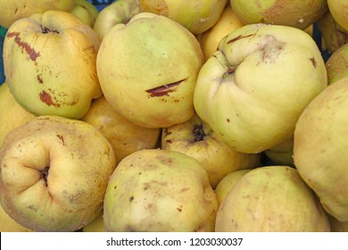 Quince. Fresh organic quince. Quince fruit background texture. Yellow quinces wallpaper. Healthy eating concept. Queen apple fruit. Natural background.
