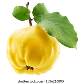 quince with leaves isolated on a white background