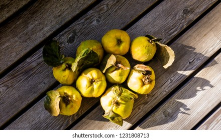 quince still live food