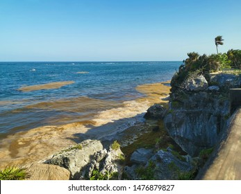 Quintana Roo, Mexico, July 19,  Large amounts of sargassum seaweed on the Tulum coast. Tulum is a town on the Caribbean coast of the Yucatan Peninsula, in Mexico, known well-preserved Mayan ruins.