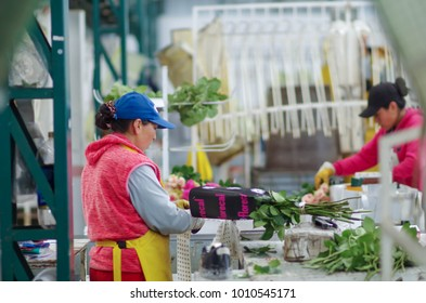 QUITO, ECUADOR - DECEMBER, 12, 2017: Indoor view of unidentified people working inside of a flower factory on bunch of blossoming beautiful roses bouquets, empaqued and classifying the quality