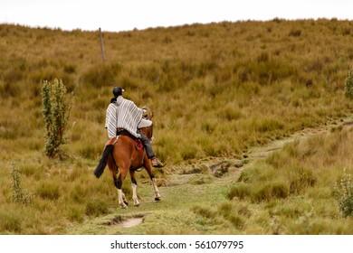 QUITO, ECUADOR - JAN 4, 2015: Unidentified Ecuadorian man riding a beautiful brown horse. 71,9% of Ecuadorian people belong to the Mestizo ethnic group